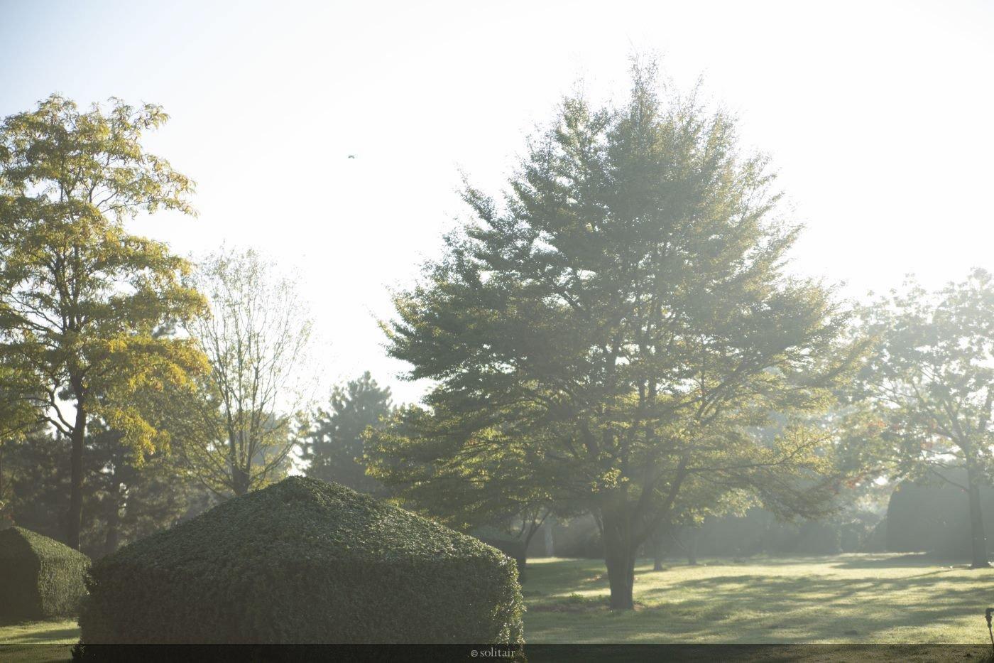 Fagus sylvatica 'Asplenifolia' meerstam